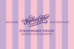 Strawberryfields copy